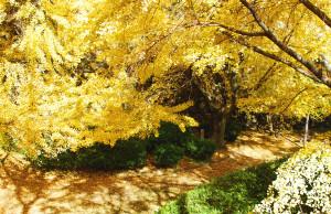 黄金色 和歌山城