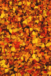 紅葉の絨毯 和歌山城 紅葉
