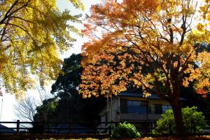逆光 和歌山城 紅葉