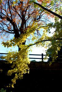 和歌山城 逆光 紅葉
